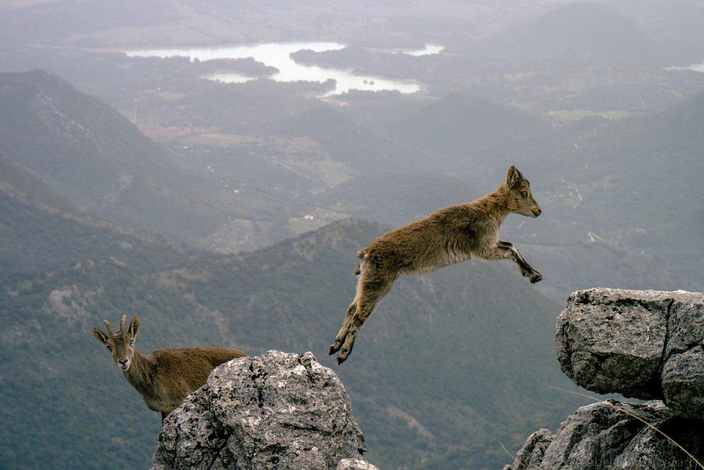 Mountain Goats - Cheap Flight Deals